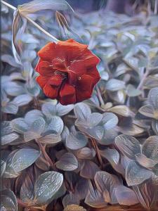 Surreal_garden1.png