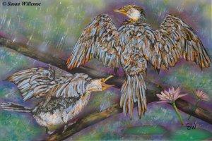 Cormorants: Dancing in the rain