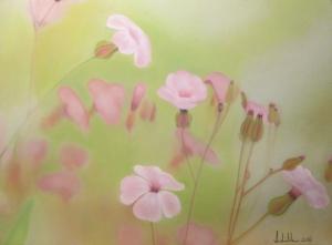 Flores silvestres.JPG
