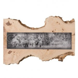 Fine Art Common Zebra on Ash wood