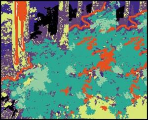 SOS FOREST fb.jpg