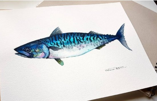 mackerel Sea Food Collection