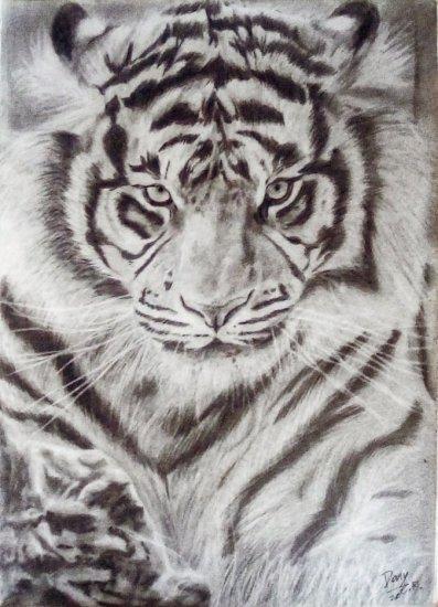 Dibujo de Tigre Realista