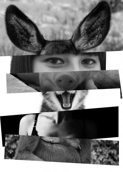 ferron_yolanda_collage 3.jpg