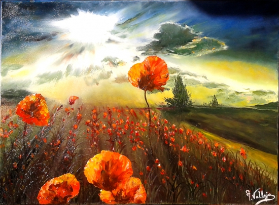 Poppies against the light