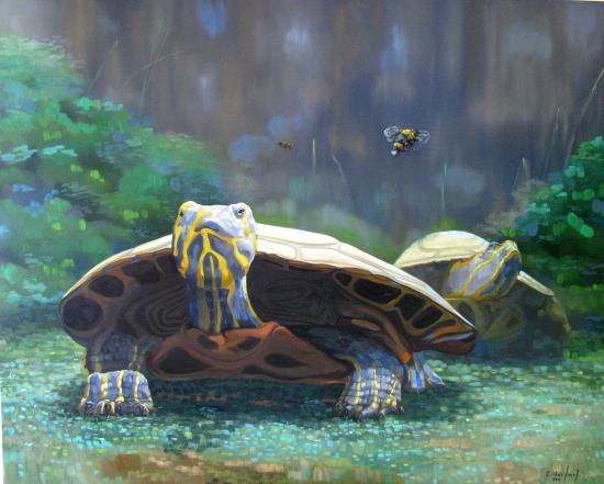 Tortugas nocturnas