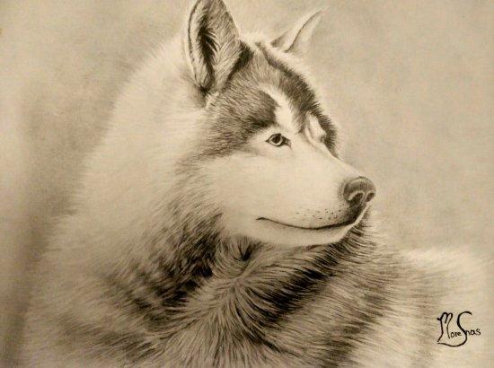 Lobo de las nieves