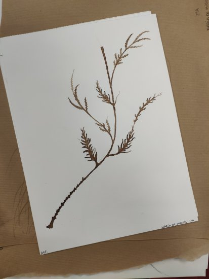 Minimalist sheets with ink