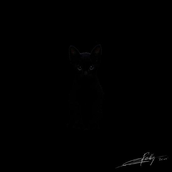 darkness in black cat.jpg