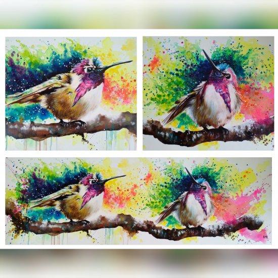 Costa´s Hummingbirds