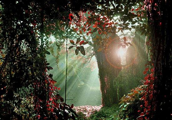 Bosque Habana