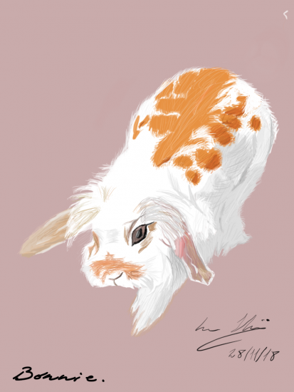 My beautiful rabbit