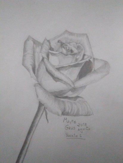 La Rosa Lápiz Dibujos Comprar Arte Original